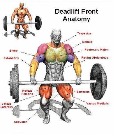 deadlifts-build-muscles